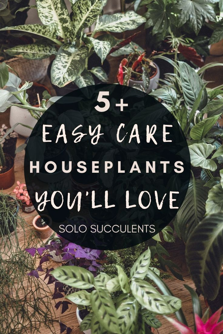 5 Easy Care Indoor Plants That Will Leave Your Home Looking Beautiful! Low maintenance plants you'll want to buy