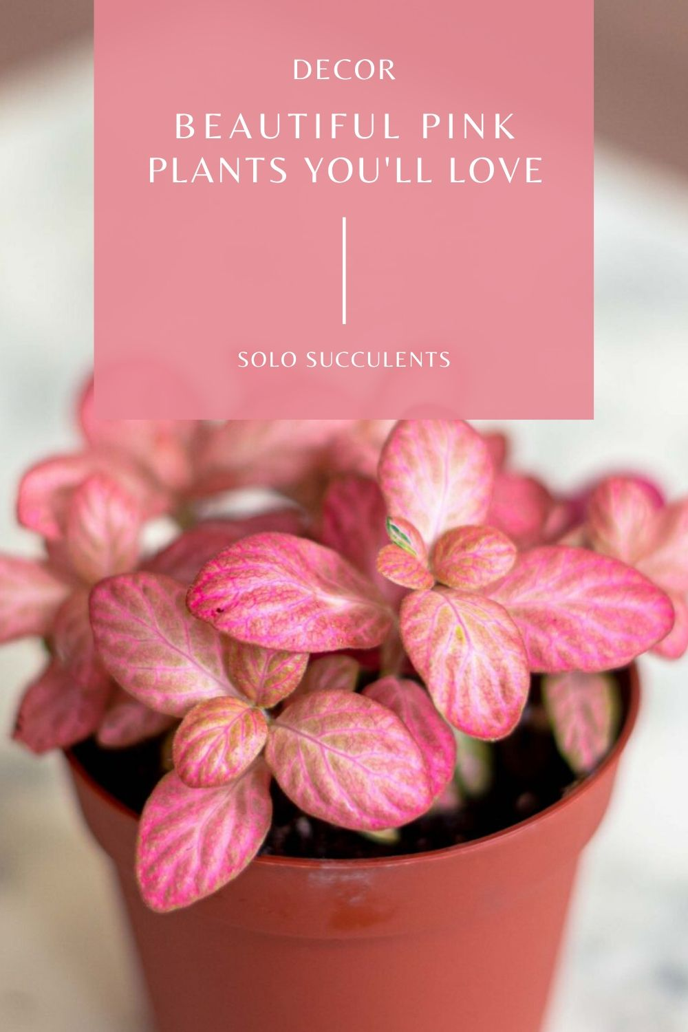 looking for some pretty foliage in your houseplants? Pink Plants You'll Love (Which Will Brighten up Your Home!)